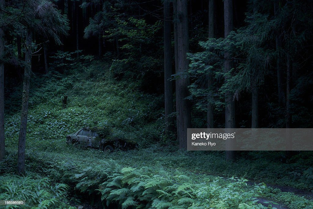 The Car In Woods Stock Photo Getty Images