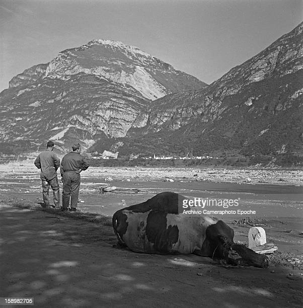 The carcass of a cow lies on the ground as a pair of soldiers stand nearby Longarone near the Vajont Dam in the Piave Valley Italy early October 1963...