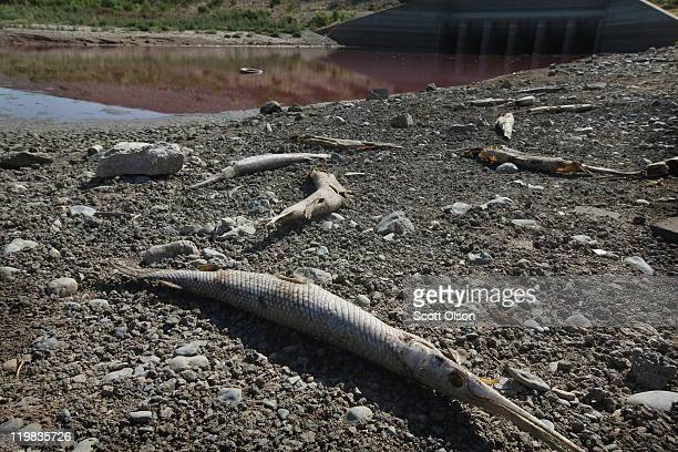 The carcass of an alligator gar rests along the shore at the edge of a small pool of red sludge-like water at the base of the dam at O.C. Fisher Lake...