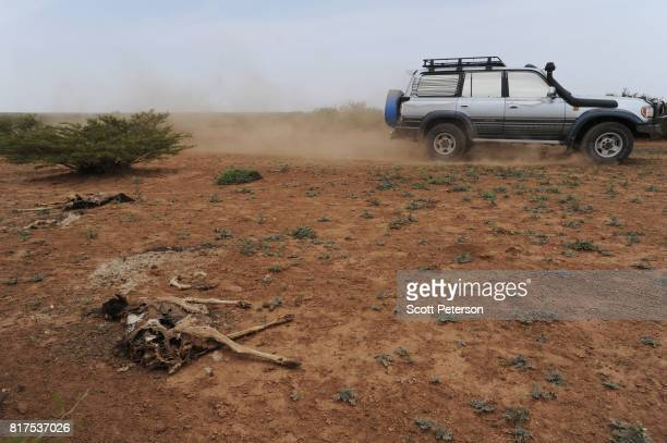 The carcasses of dead goats line the Somali desert as the Horn of Africa faces severe drought in Gorey an area 30 miles west of the capital Hargeisa...