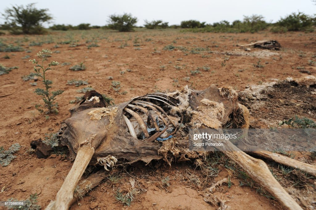 The carcasses of dead goats (their bellies full of plastic bags) line the Somali desert as the Horn of Africa faces severe drought in Gorey, an area 30 miles west of the capital Hargeisa, Somalia, on June 21, 2017.The United Nations and NGOs have sought to raise resilience in pastoralist communities that have seen their lifeblood herds of camels, goats and sheep decimated by up to 80 percent, leaving 6.7 million people in need of assistance to avoid famine in Somalia and Somaliland.