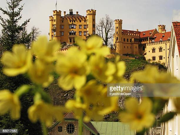 The castle Hohenschwangau is seen through flowers in yellow colours on September 24 2008 in Hohenschwangau Ostallgaeu Germany The castle was a...