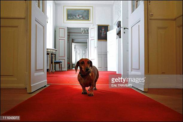 The castle is the residence of the Danish sovereigns between Easter and the end November The dog of the castle in Fredensborg Denmark on Octorber 06...