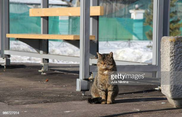 the cat at the bus stop - nikitina stock pictures, royalty-free photos & images