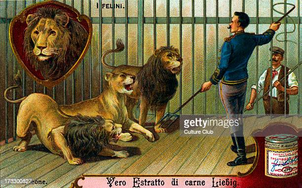 Lions illustration on Liebig collectible card Early 20th century