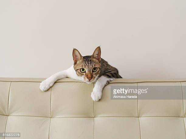 The cat hanging on the couch.