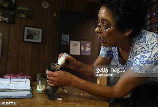 The Cat House on the Kings founder Lynea Lattanzio hand feeds a newborn kitten at The Cat House on the Kings on August 25 2017 in Parlier California...