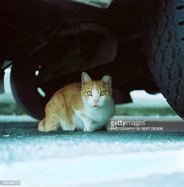 The cat is sitting under the car