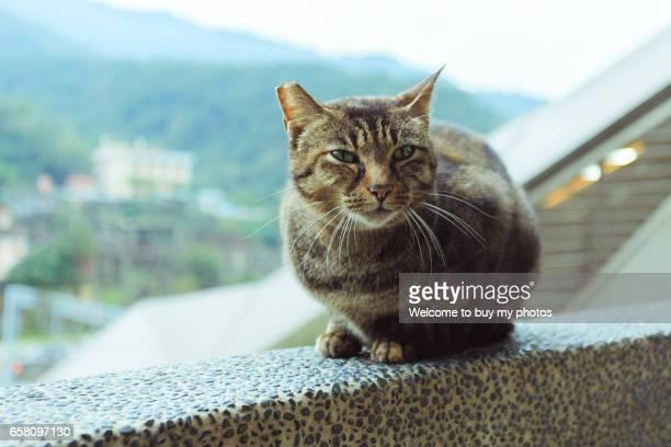 The cat of Houtong, Taipei