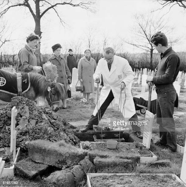 The cat Peter is lowered into his grave at the Pets' Cemetery of the People's Dispensary for Sick Animals in Ilford 13th March 1964 Peter who joined...