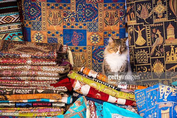 The cat seller