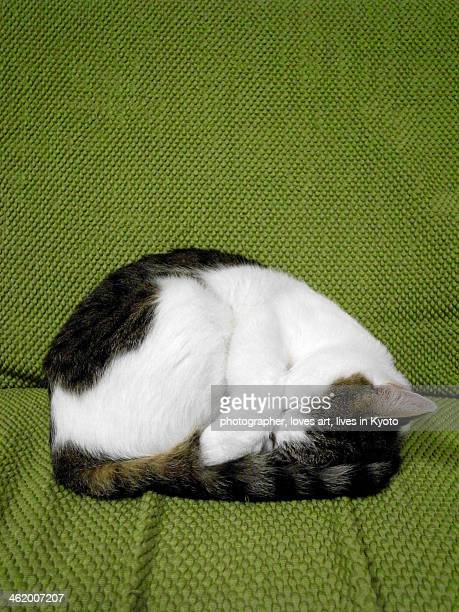 The cat which curls up and sleeps