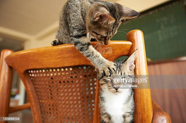 the cat which kittens on a chair - dos animales fotografías e imágenes de stock