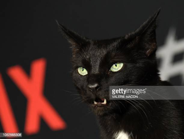 The cat who is part of the cast arrives at the Season 1 Netflix's Chilling Adventures of Sabrina Premiere at the Hollywood Athletic Club on October...