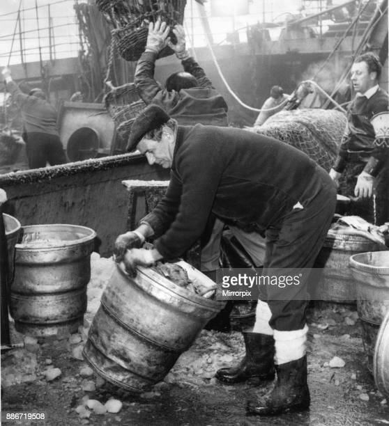 The catch being landed at Hull's Fish Dock at St Andrew's Dock Circa 1970