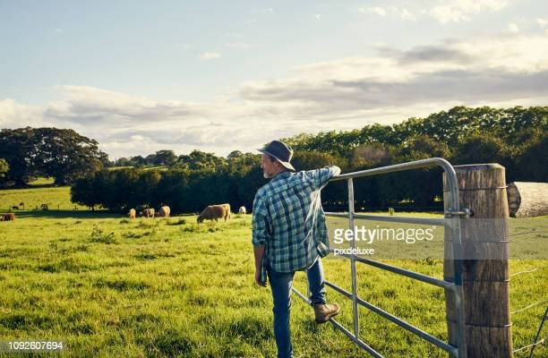 the cattle are all out to graze - rural scene stock pictures, royalty-free photos & images