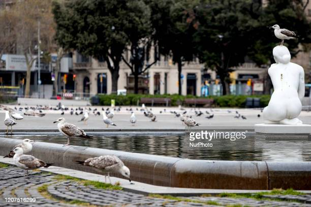 The central Plaza de Catalunya full of pigeons and seagulls after the Barcelona City Council has ordered the closure of all parks and gardens in the...