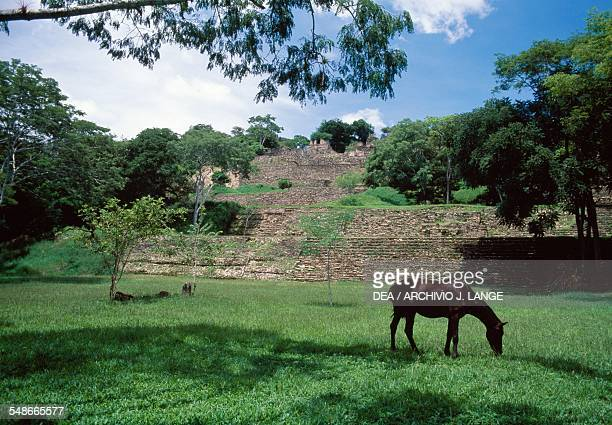 The ceremonial centre with a horse in the foreground Tonina Ocosingo Chiapas Mexico Mayan civilisation 6th9th century