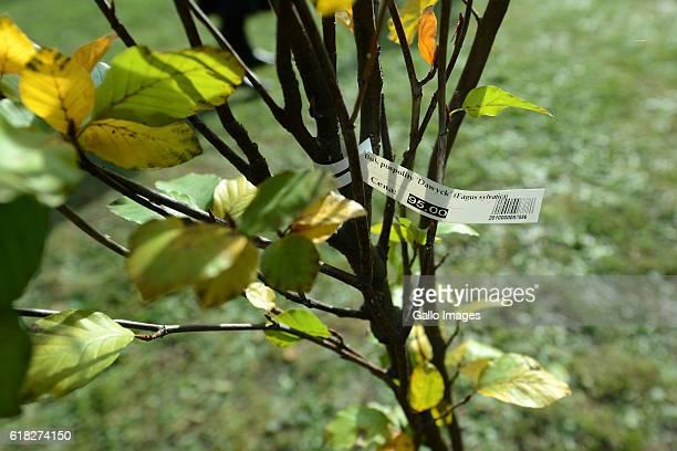 The ceremony of planting Wislawa Szymborskaâs acacia on October 24 2016 near Dworek Lowczego in Krakow Poland Szymborska the Polish poet and essayist...