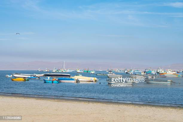 muelle el chaco - pisco peru stock photos and pictures