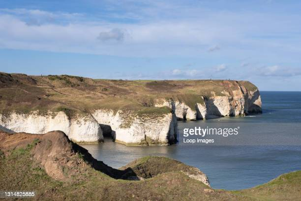The chalk cliffs at Flamborough Head on the Yorkshire coast.