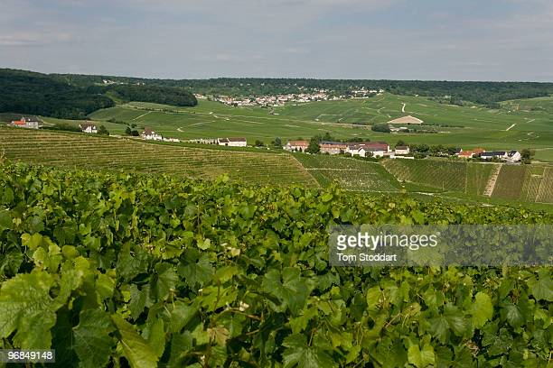 The Champagne region of France is world famous for its production of fine sparkling wines and labels such as Moet et Chandon Dom Perignon and...