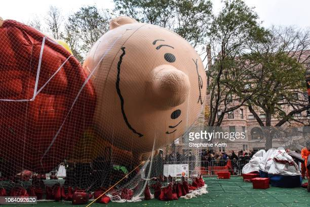 The Charlie Brown balloon lies face down after being inflated by the Macy's inflation team ahead of the Macy's Thanksgiving Day Parade on November 21...