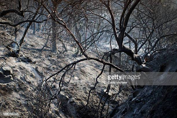 The charred remains of an oak forest are seen at the Springs fire on May 4 2013 near Camarillo California Improving weather conditions are helping...