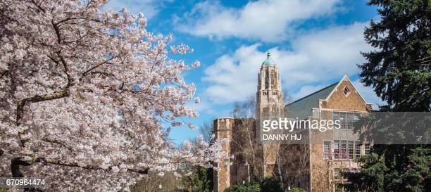 the cherry trees in bloom - ワシントン大学 ストックフォトと画像