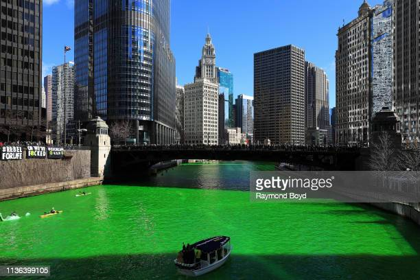 The Chicago River, after members of Plumbers Local 130 U.A. Poured environmentally safe orange powder along the Chicago River turning it green for...