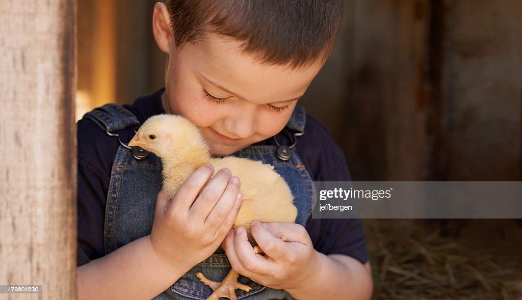 The chick whisperer : Stock Photo
