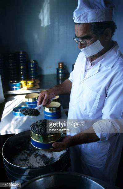The chief caviar maker puts the ready caviar into a large tin at Khajenafas fishery, located about 20 kilometers away from Bandar Torkaman on the...