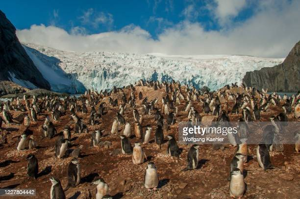 The Chinstrap penguin colony with a glacier in the background at Point Wild, where the men of the Shackleton Endurance expedition 1914 to 16...