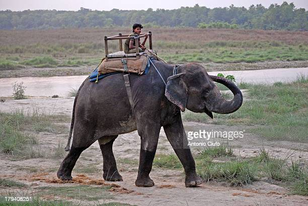 The Chitwan National Park is the oldest of Nepal. It was created in 1973 and became a World Heritage Site in 1984. It is located in south-central...