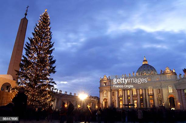 The Christmas tree in St Peter's Square stands light up during a tree lighting ceremony December 17 2005 in Vatican City The 98 foot high tree was...