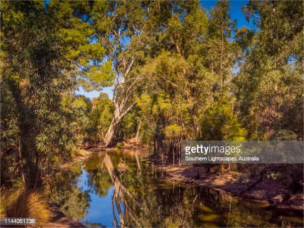 the city of bendigo botanical gardens, in the autumnal season, central victoria australia. - bendigo stock pictures, royalty-free photos & images
