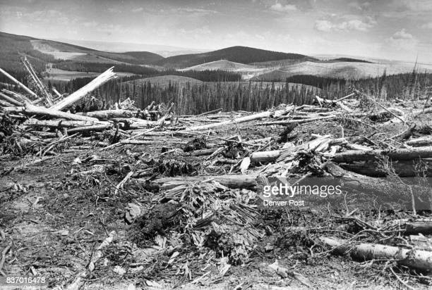 """The cleanup of forest land and logging debris is yet to be done. But Mrs. Hayward protests, """"It'll take 50 years to get another forest started."""" As..."""