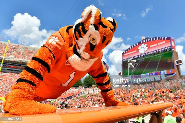The Clemson Tiger mascot does pushups after the Tigers scored a touchdown in the third quarter of their game against the Furman Paladins at Clemson...