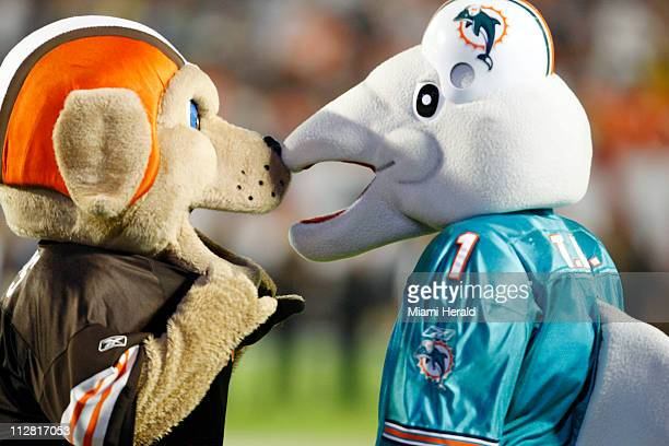 The Cleveland Browns mascot left faced off with the Miami Dolphins mascot before the start of the 2010 Pro Bowl on Sunday January 31 at Sun Life...