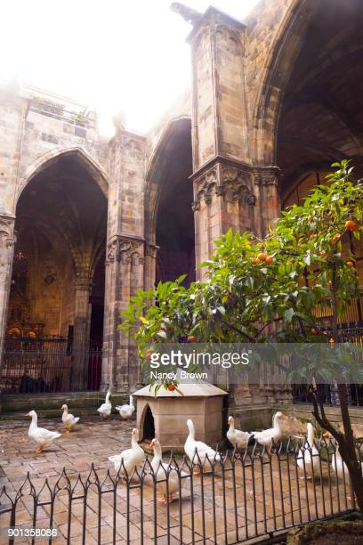 The Cloister of The 13 Greese in Saint Eulalia Cathedral in Barcelona Spain.