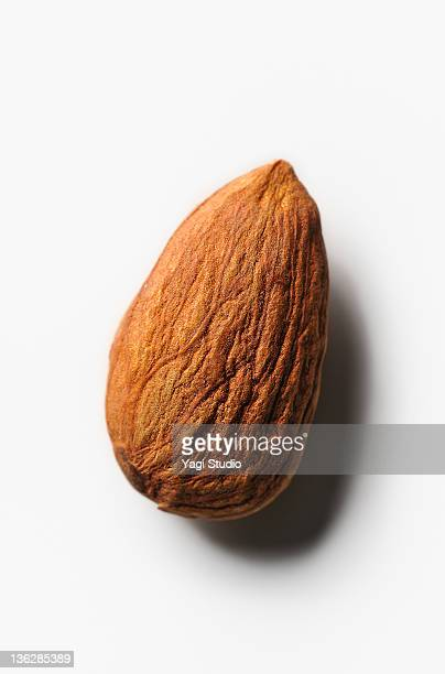 The close-up of the almond