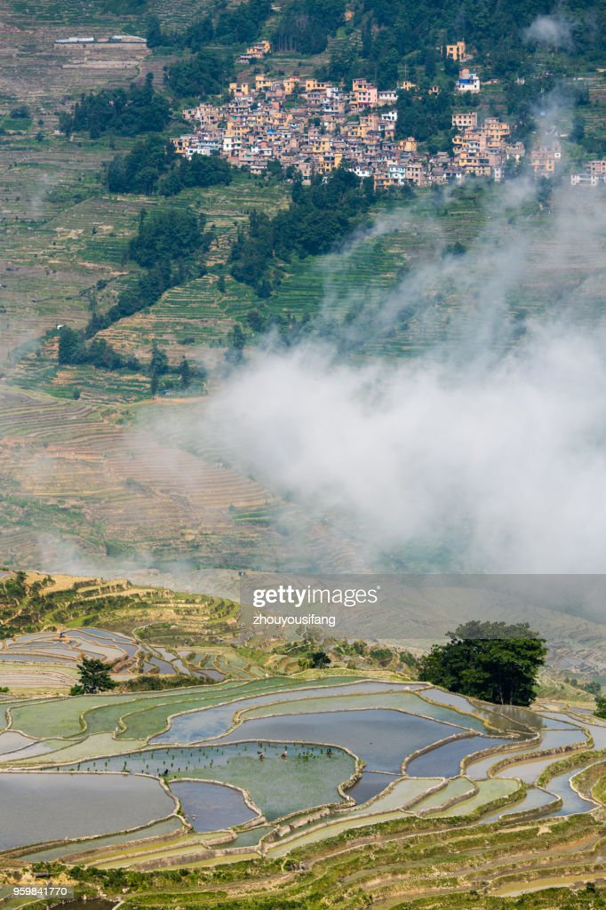 The cloud sea and the terraced fields : Stock-Foto