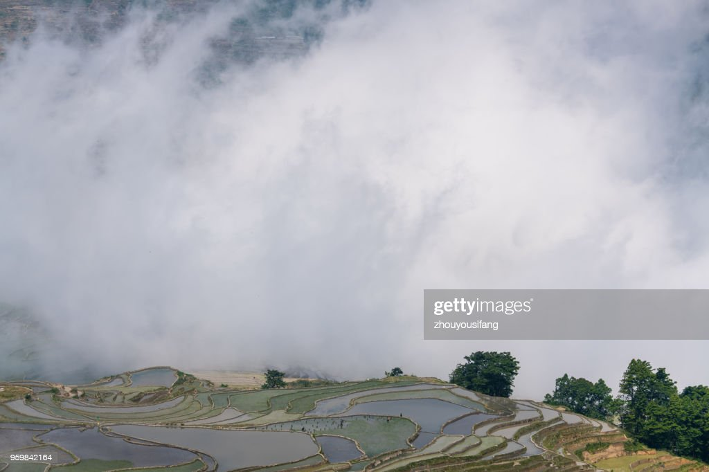 The cloud sea and the terraced fields : Stock Photo