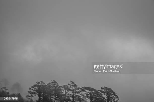 the cloudy sky above the dochula mountain pass in dochula, bhutan springtime - dochula pass stock-fotos und bilder