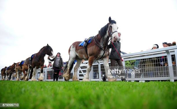 The Clydesdale horses make their way around the parade ring prior to the start at Exeter Racecourse on November 26 2017 in Exeter England