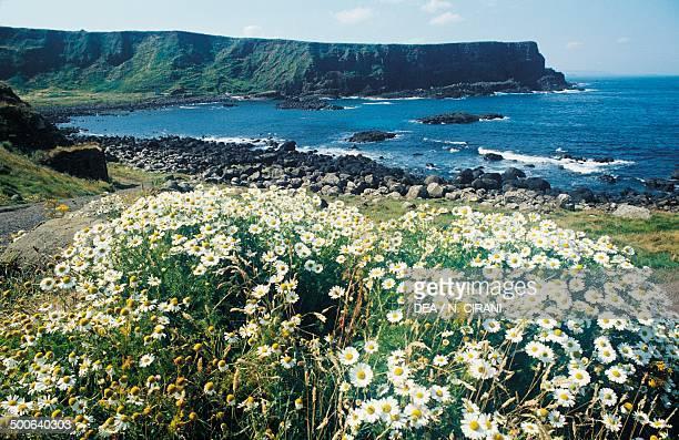The coastline around the Giant's causeway outcrop of columnar basalt formations Northern Ireland United Kingdom