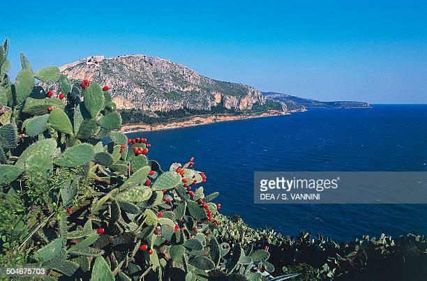 The coastline near Nafplio prickly pears in the foreground Argolis Greece