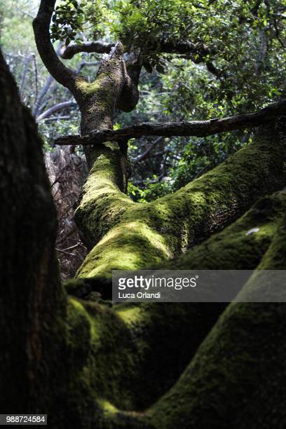 the coat of mossy green