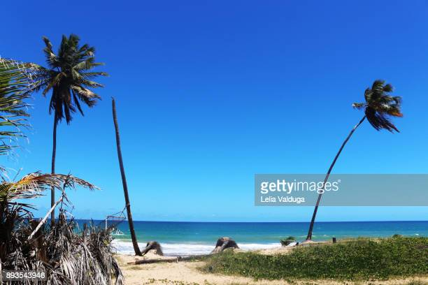 The coconut trees and the sea - Paraia do Forte - BA - Brazil