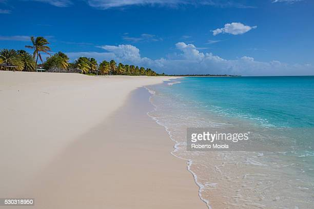 The coconut trees lapping on the beach of K-Club, a thin strip of sand overlooking the Caribbean Sea over four miles long, Barbuda, Antigua and Barbuda, Leeward Islands, West Indies, Caribbean, Central America